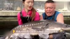 号称长江鱼王的鲟鱼,五万块钱他都不卖,还有什么致富秘诀呢!