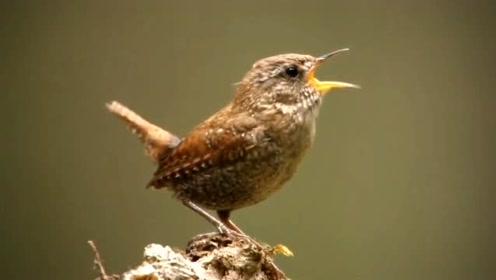 新版八年级生物上册5.1.6 鸟
