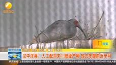 汉中洋县:人工配对朱鹮陆续产卵,较去年提前近半月