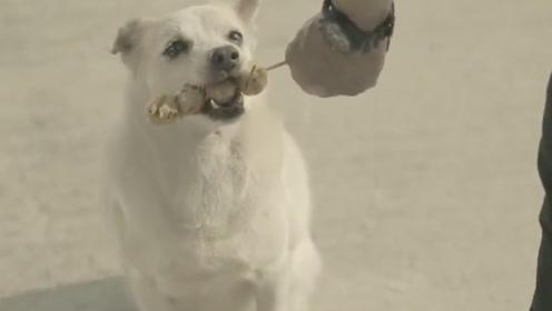 泰国公益广告片,狗的至极好看报恩,让人看一次就哭一次!感人的科幻电影mp4图片