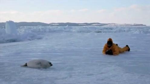 萌宠搞笑MV:《懒惰的格陵兰海豹》,音乐视频!