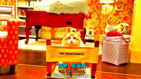 【法国猫片】猫片大电影要上线啦 对喵主角的采