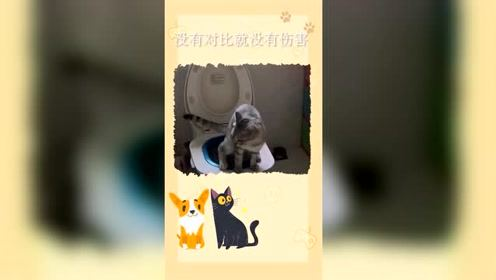 搞笑动物视频:没有对比就没有伤害