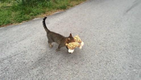 猫咪叼着小老虎,大摇大摆走进灌木丛,镜头记