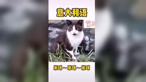如何辨别是那个国家的猫