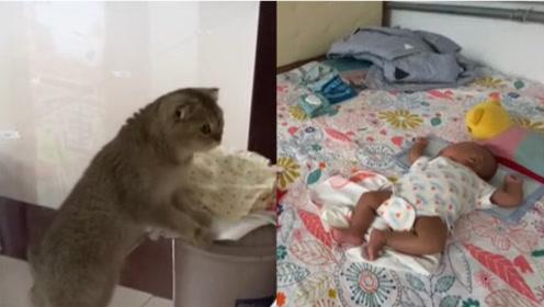 """家中喜获新生婴儿,猫咪蹲屋门口小心""""监护"""""""