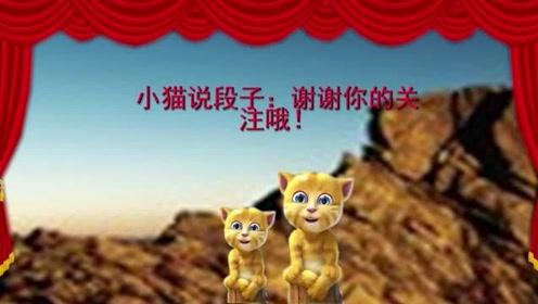 小猫讲笑话:走路上被人指着骂,二货真开心,笑的我肺疼!
