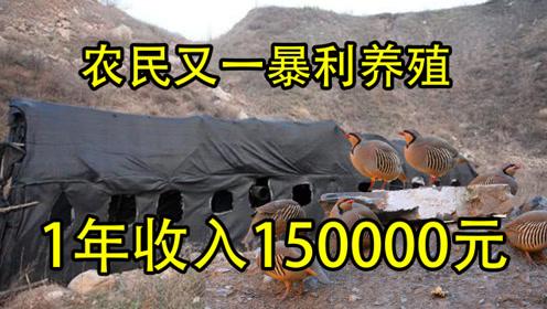 1年养殖3批年收入150000元,单价100元1斤,又增加一个暴利行业