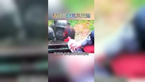 视频不火我不服,猩猩的表情我秒懂。