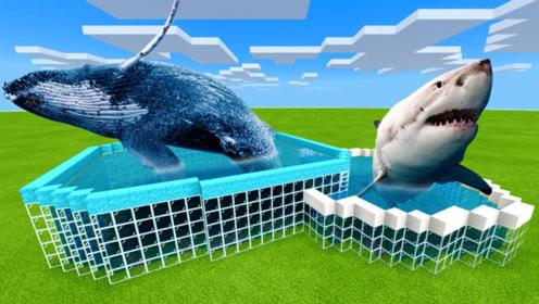 我的世界-搞笑动画:建造超级水族馆挑战赛-蓝鲸