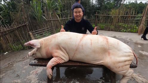 阿米来炊二锅这面,买农家土猪,净重270斤,要多少人才按的住?