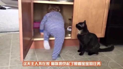 搞笑动物:猫咪最坏能坏到什么程度?看完这些