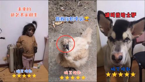搞笑动物:主人又发现二狗子新技能,用舌头给