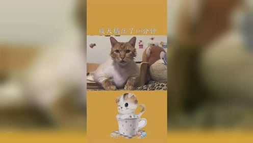 被大橘压了10分钟之后……#萌宠成精了 #猫咪的迷惑行为#爱宠治愈季#求一个神评加持
