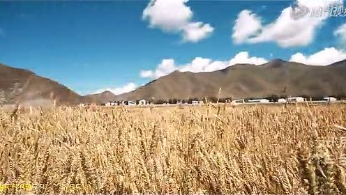 卓卓玛—天籁之爱MV