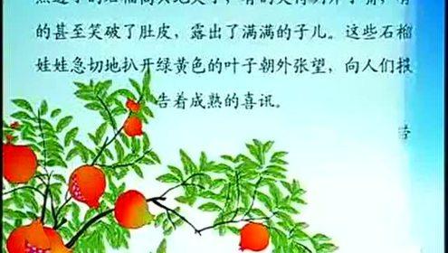 沪教版二年级语文上册24 石榴