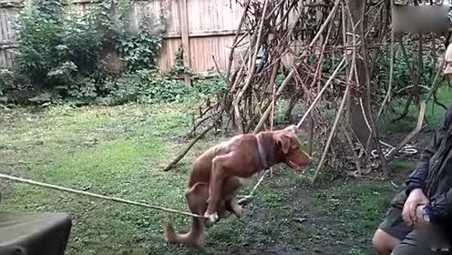 都笑岔气了 终于找到最逗的动物搞笑视频了