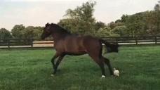 一匹马被一只鸡追着四处乱跑,要不是视频,真不敢相信
