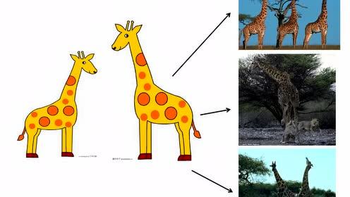 八520快三生物下册七单元第3章 生物的进化3.生物进化的原因