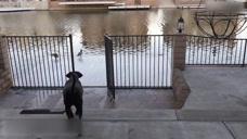 小狗看到小鸟,直接就要去抓鸟玩,没想到它直接就掉进了河里!