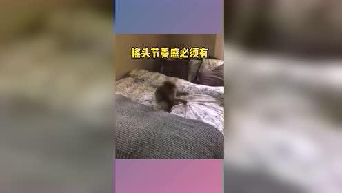 热门小视频:爷最摇摆