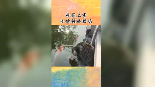 搞笑视频:世界上有不偷腥的猫吗