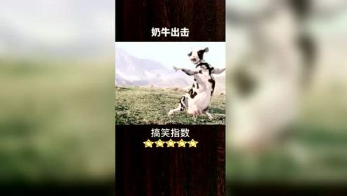 搞笑视频:终于找到这头功夫奶牛了