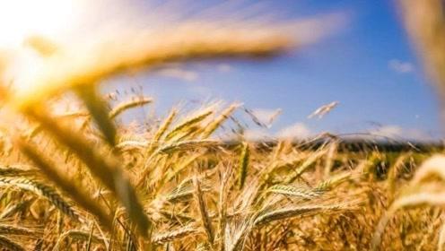联合国发出预警,多国将面临粮食危机,中国老