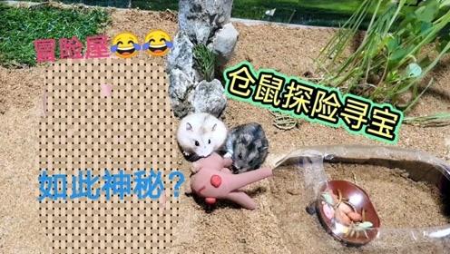 搞笑视频:两只小仓鼠玩沙漠探险寻宝游戏,他