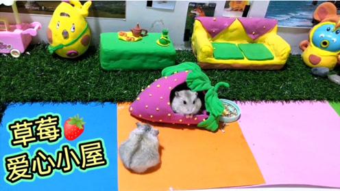 搞笑视频:给两只仓鼠做的爱心草莓小屋他们很开心,但为啥就突然打起来了呢