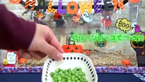 主人给仓鼠新调的坚果餐,看到这样的美食,仓鼠爬到碗里吃