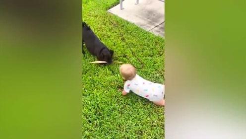 宝宝遇上小动物的搞笑瞬间
