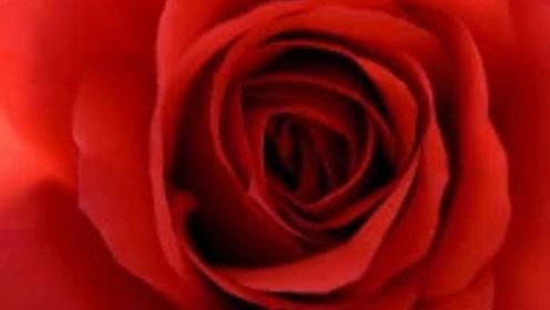 名曲欣赏《秋天的玫瑰》祝福朋友,秋天快乐!