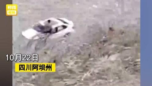 3人自驾游九寨g坠入岷江!目击者拍摄现场视频,场面让人绝望……