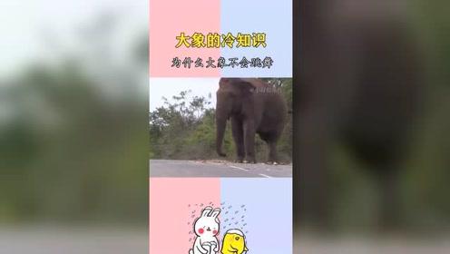 搞笑视频:为什么大象不会跳舞,你知道吗!