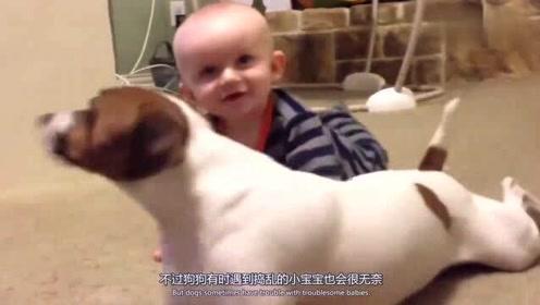 搞笑动物:狗狗正在睡觉,小宝宝过来捣乱,狗