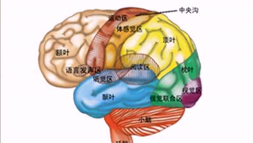 蘇教版五年級科學下冊第五單元 人體的司令部