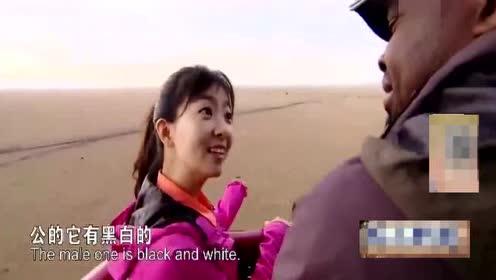 非洲小伙90年就到中国留学汉语流利 回去当导游
