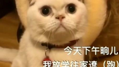 小猫的钩法及图解