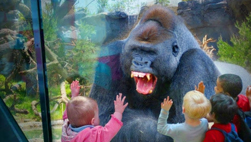 动物园的猩猩竟是人扮的,180元门票就给我看