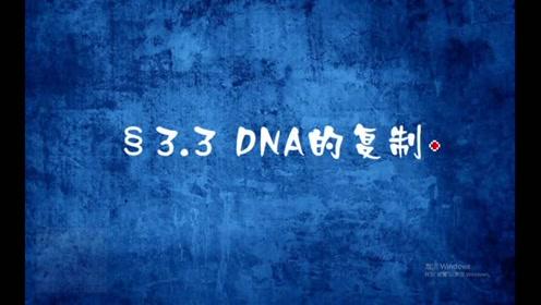 高中生物必修二《遺傳與進化》3.3 DNA的復制