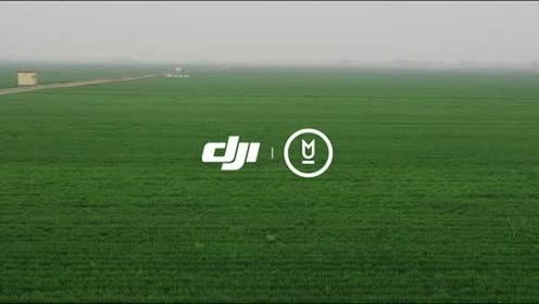 山东数字化千亩小麦统防统治