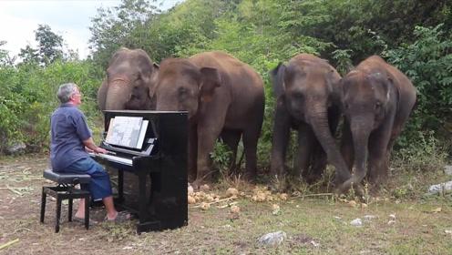 大象也爱听音乐!钢琴家倾情演绎,大自然中上