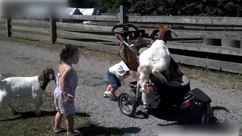 把动物当成新玩具,这孩子太皮了
