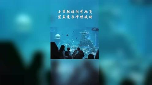 小男孩被同学欺负,鲨鱼竟来冲撞玻璃,同学们
