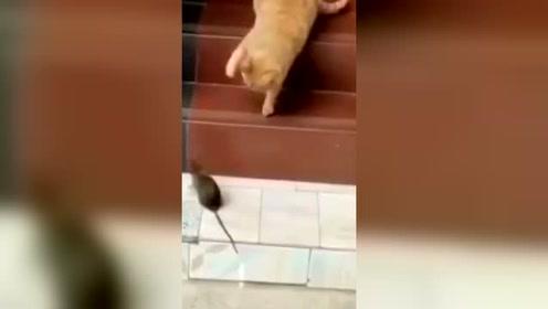 猫:只要有我在,你就别想上楼!