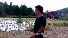 农村二舅卖鹅,9.6一斤卖了1200只,卖了10万有多少利润