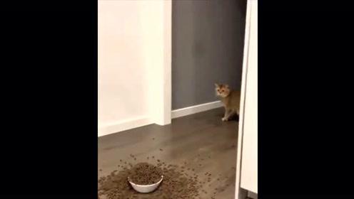 动物搞笑大合集!你能忍住多久不笑哈哈哈!