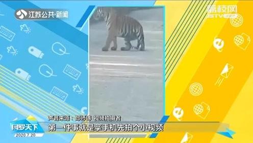 不敢動!的哥偶遇野生東北虎 停車對視二十分鐘:緊張又害怕!