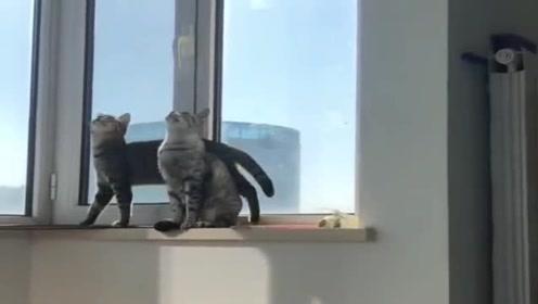 当真猫遇到了假猫,这家伙的好奇心,瞬间爆发
